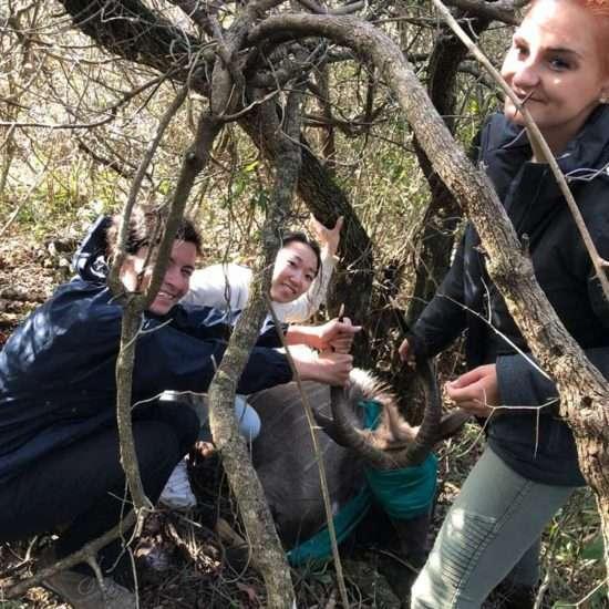 Wildlife-Vet-in-South-Africa-in-the-Bush---Global-Vet-Experience