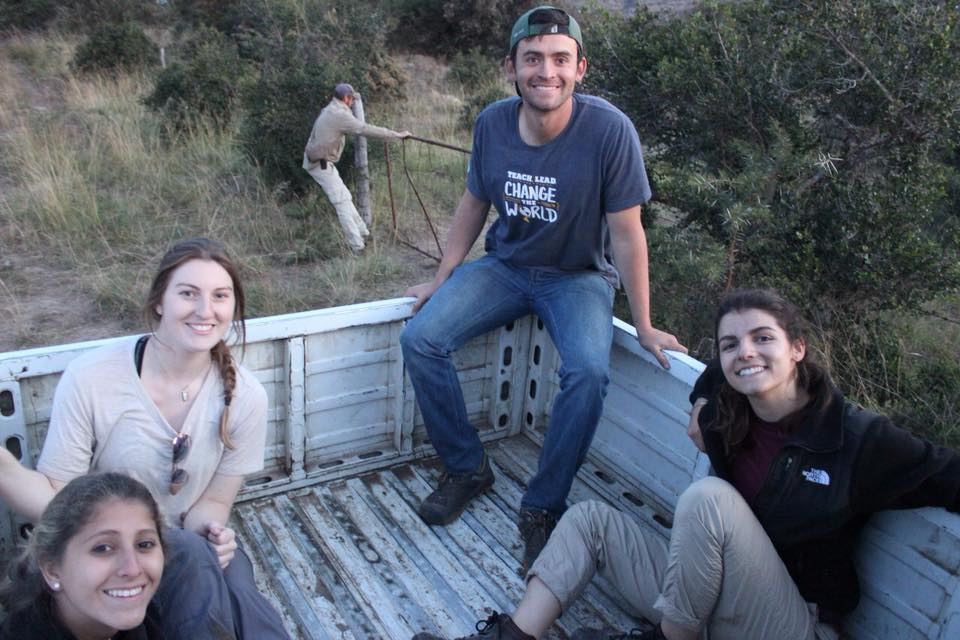 Veterinarians about to capture wild buffalo - Global Vet Experience