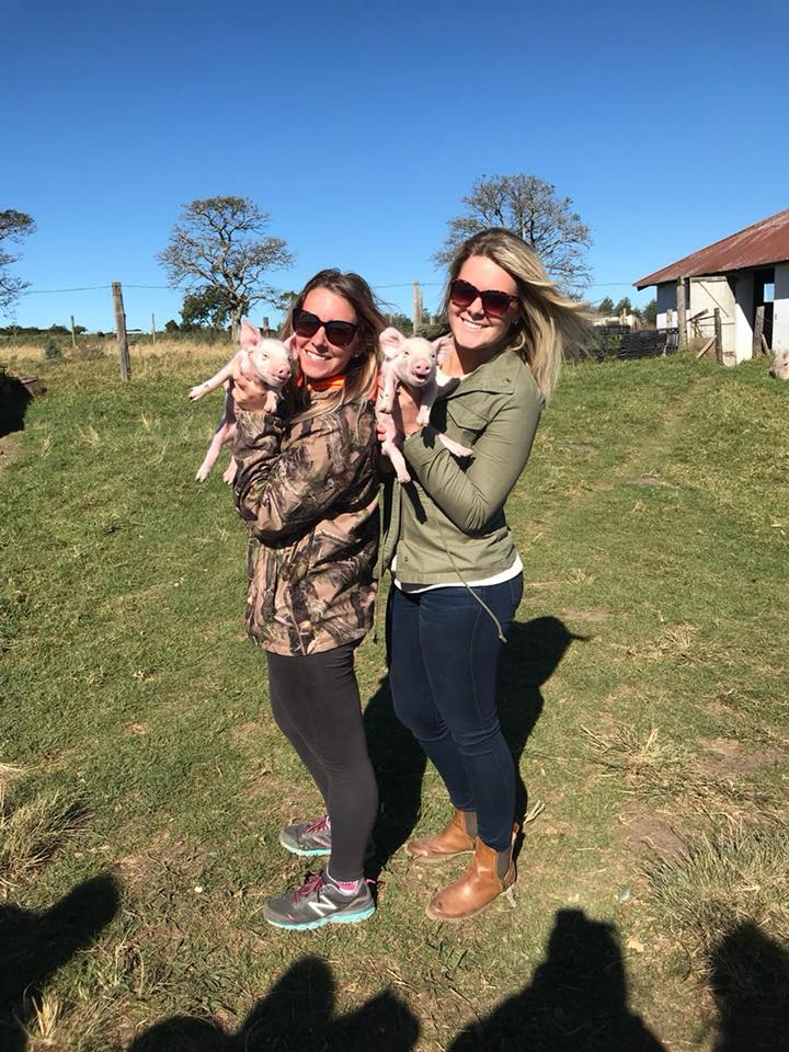 Veterinarians holding young piglets on Livestock Day - Global Vet Experience