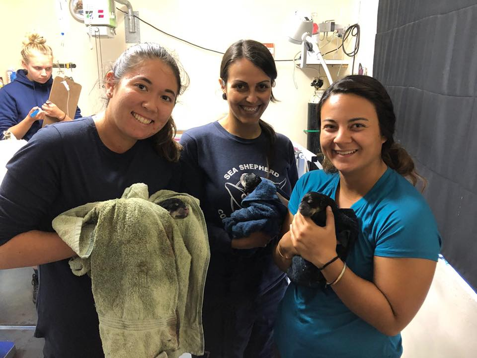 Post C-section natal care for puppies - Global Vet Experience
