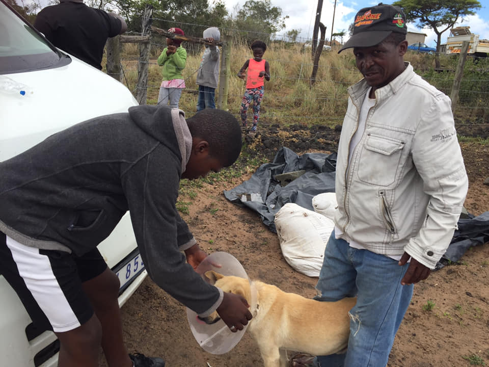 Mlungu Canine Eye In Recovery - Global Vet Experience