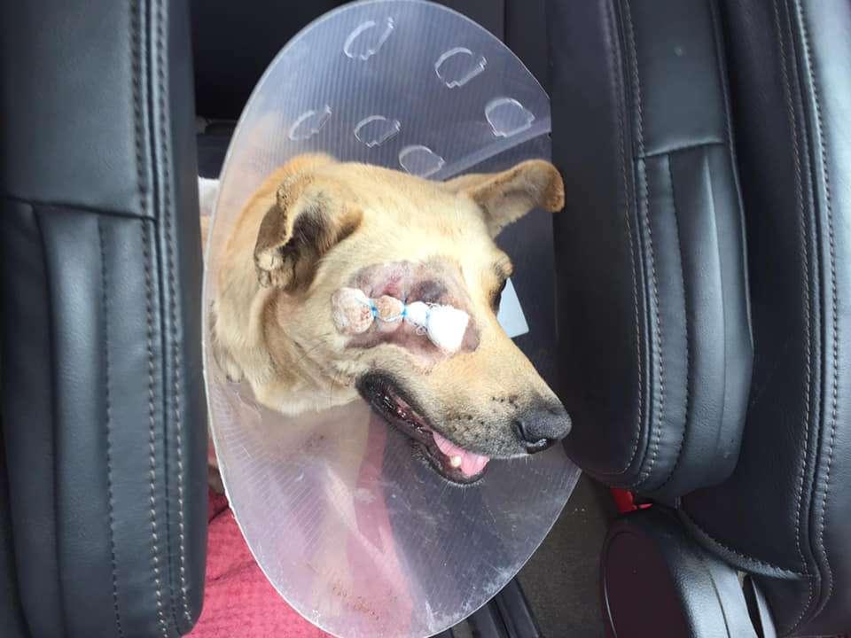 Mlungu Canine Eye Surgery - Global Vet Experience